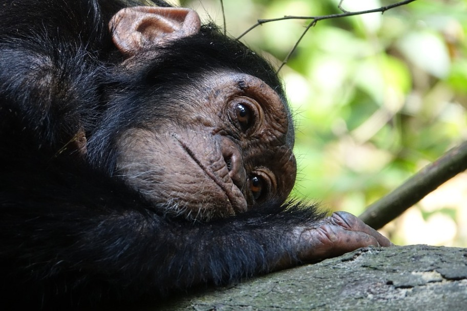 Tanzania Safari Itinerary - Mahale Mountains National Park