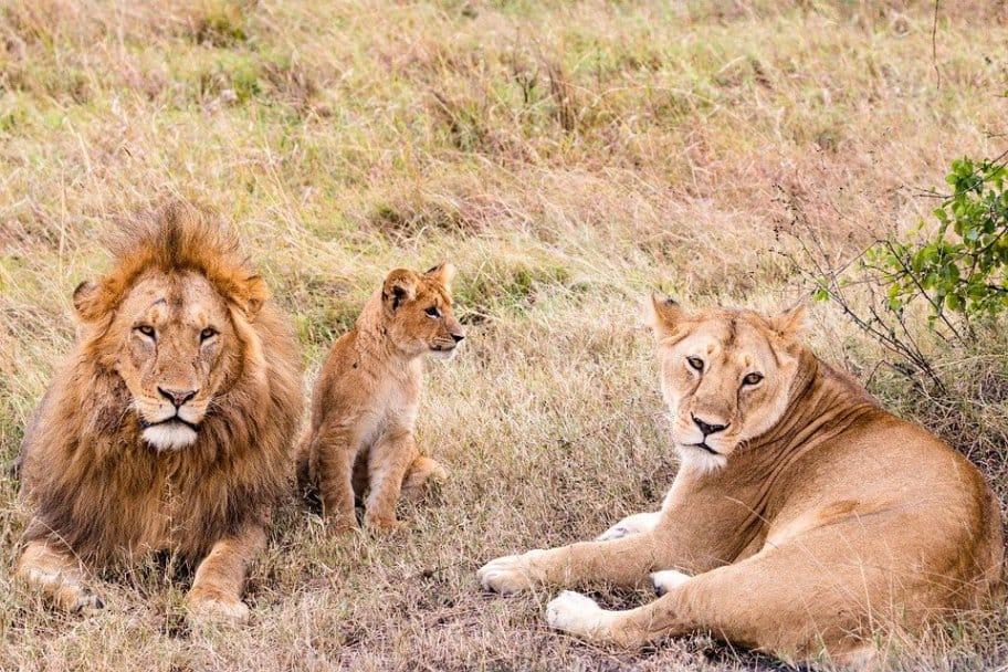 Tanzania Safari Itinerary - Nyerere National Park