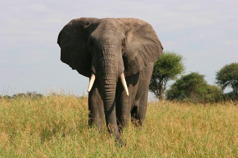 Tanzania Safari Itinerary - Tarangire National Park