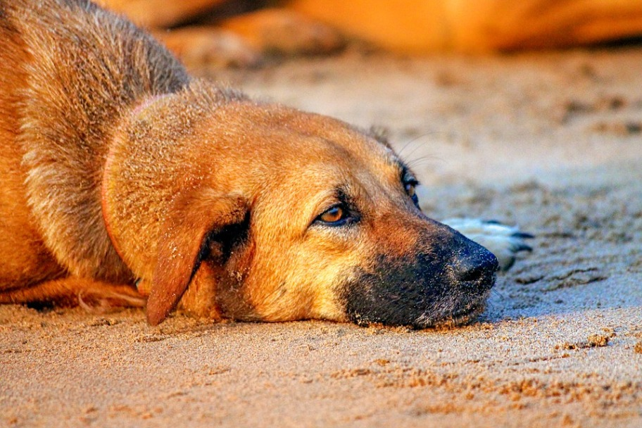 Egypt Entry Requirements - Rabies Vaccine Recommendation