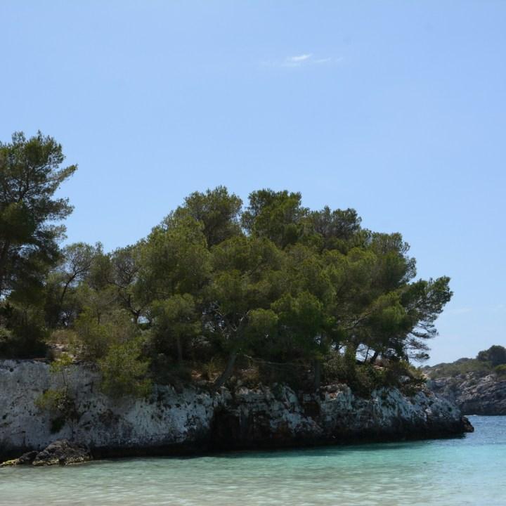 cala turqueta pine trees