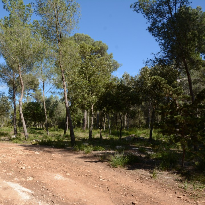 camino cavalls hiking trail menorca
