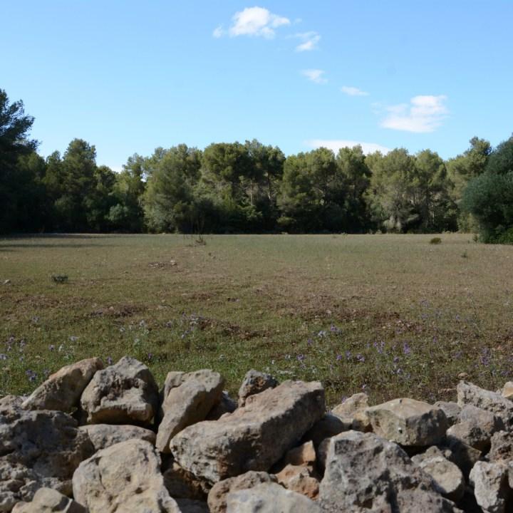 menorca-field