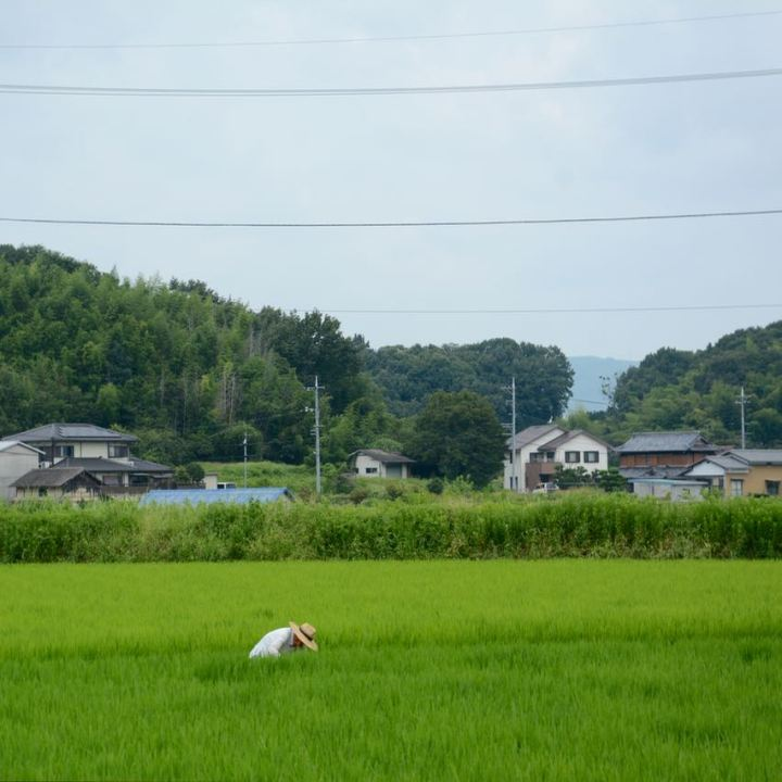 Kibi plain bike ride rice field farmer