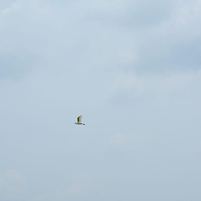 kibi plain cycle ride crane