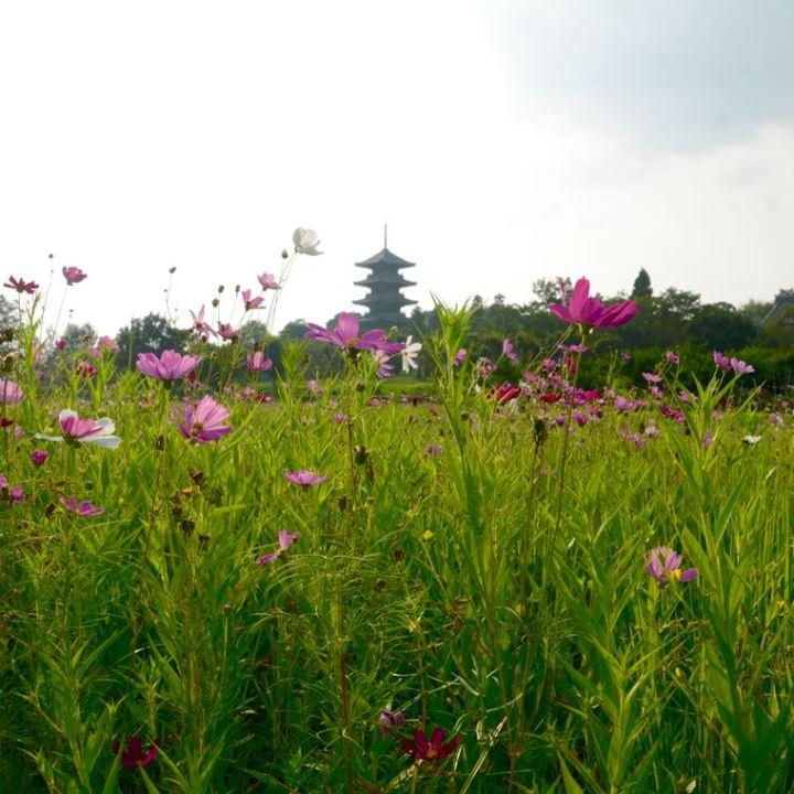 Kibi plain Bitchu-Kokubunji Temple