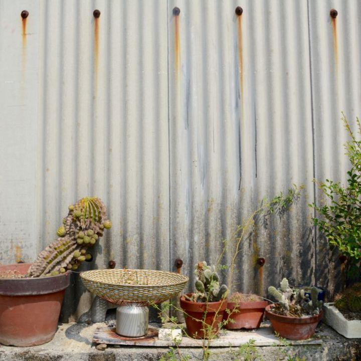 teshima ieura setouchi tirennale cacti