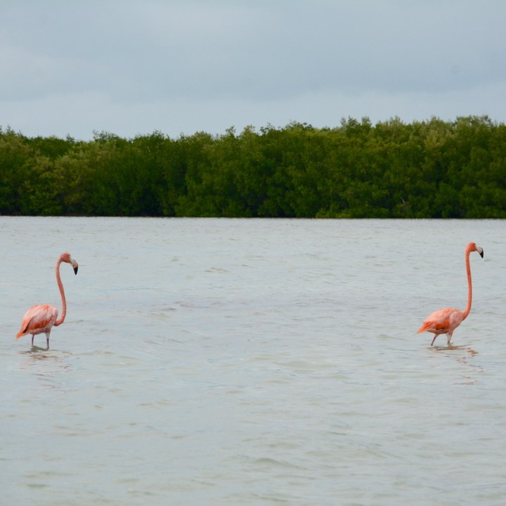 Travel with children kids mexico rio lagartos  flamingo