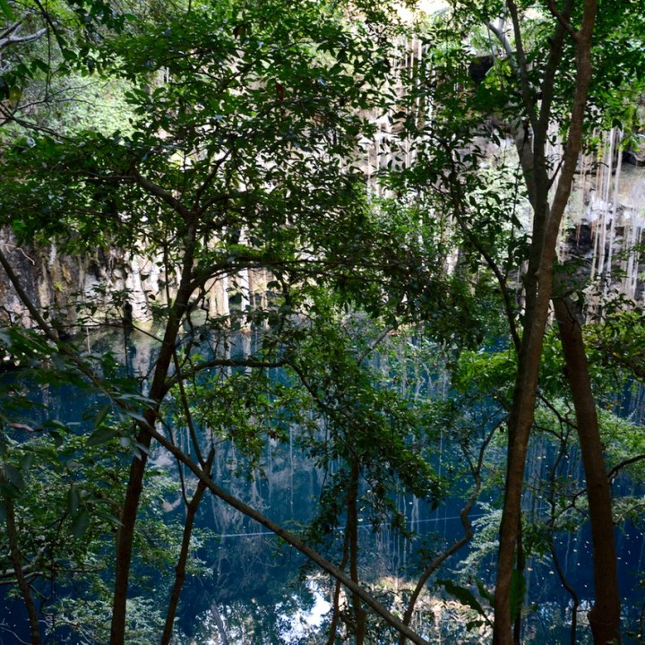 travel with children kids Yokdzonot Cenote tree