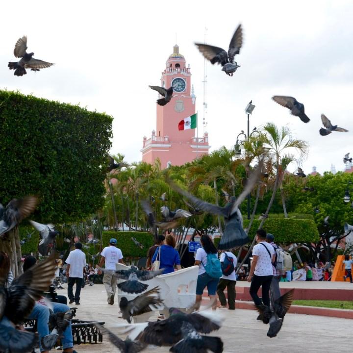 Travel with children kids mexico merida plaza grade pigeons