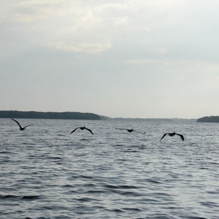 Travel with children kids mexico celestun boat tour pelikans