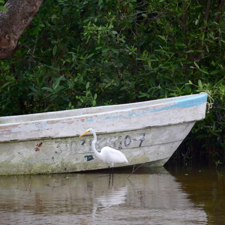 Travel with children kids mexico celestun boat tour egret