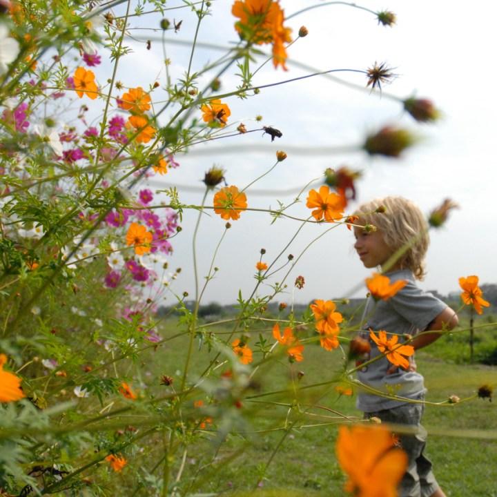 travel with children kids japan tokyo flower fields park