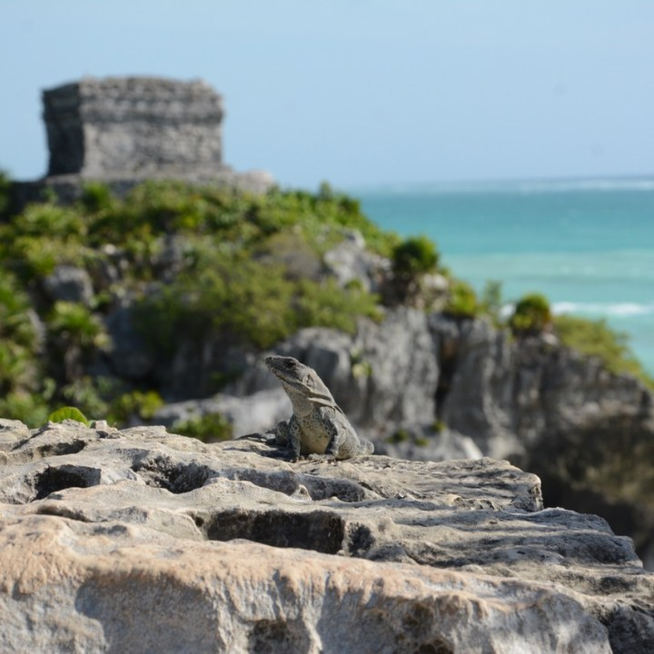 Travel with children mexico Tulum mayan ruins