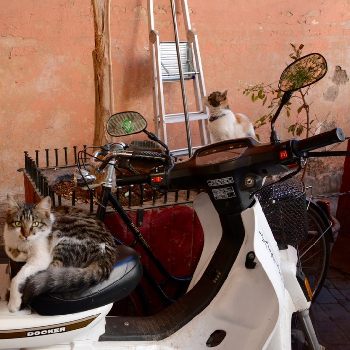 Travel with children kids Marrakesh morocco medina cats