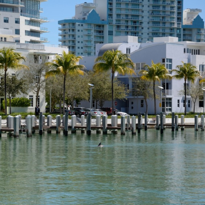 travel with kids children miami south beach dolphin