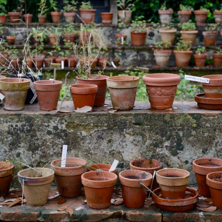 travel with kids children pisa italy botanic garden plants pots
