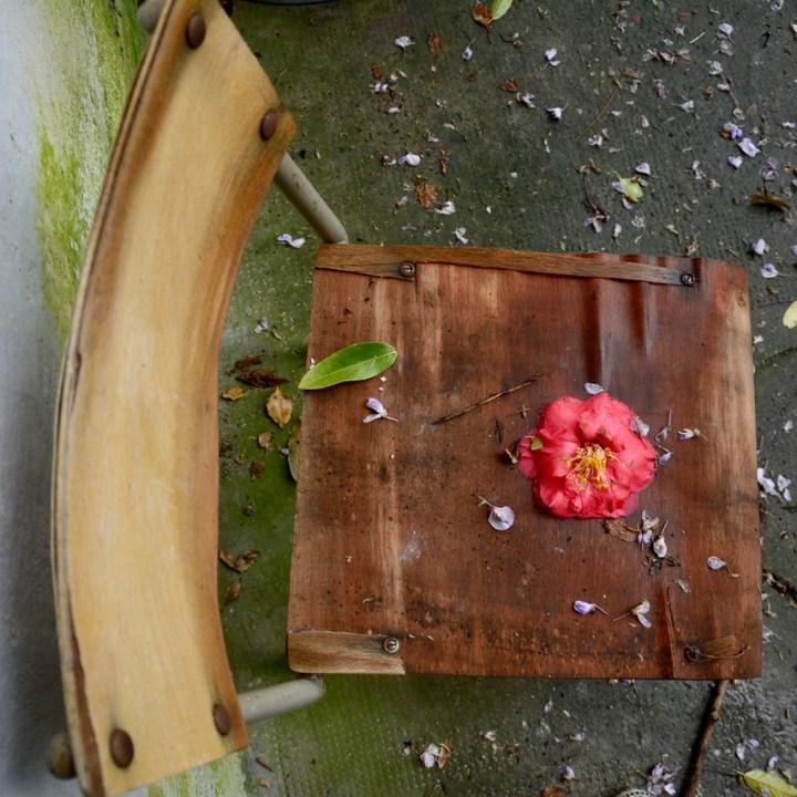 travel with kids children pisa italy botanic garden camellia flower