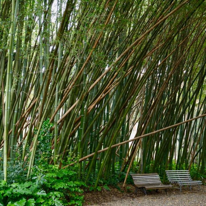 travel with kids children pisa italy botanic garden bamboo grove