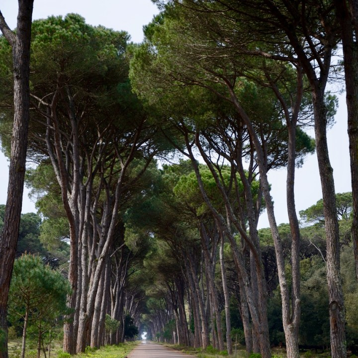 travel with kids children pisa italy nature park san rossore pine tree alley