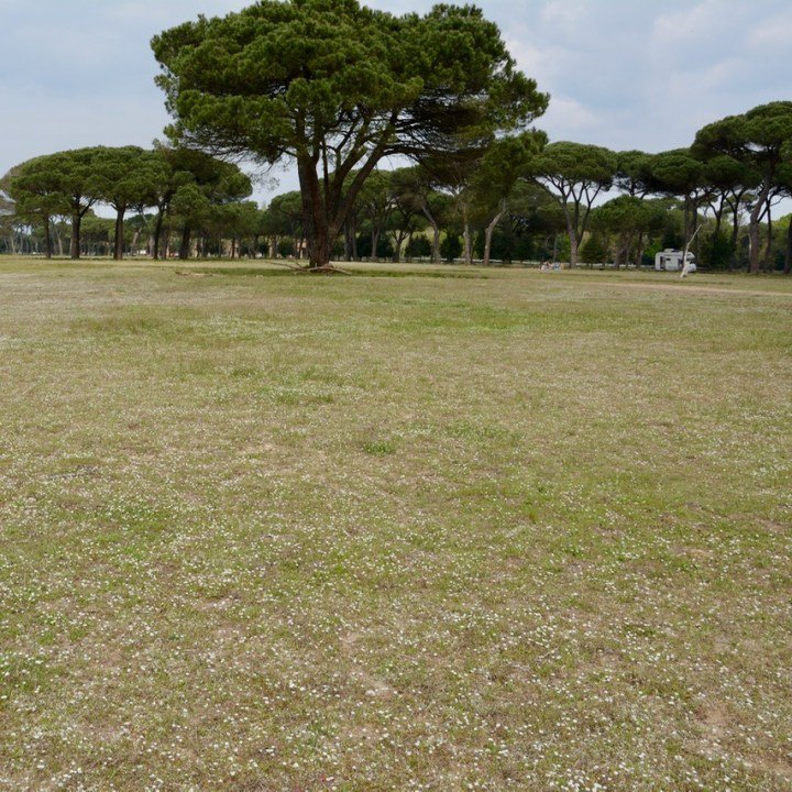 travel with kids children pisa italy nature park Migliarino flower field