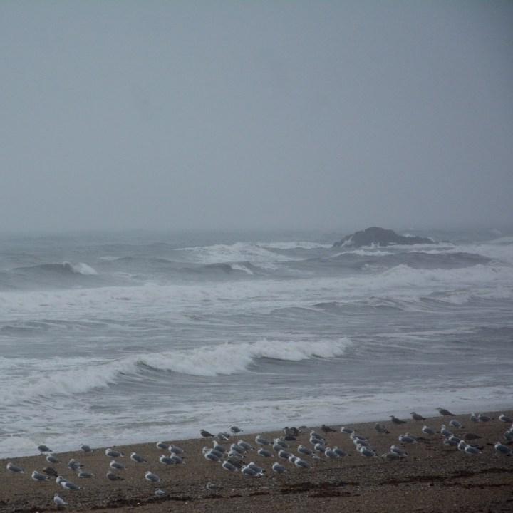 travel with kids children porto portugal beach seagulls