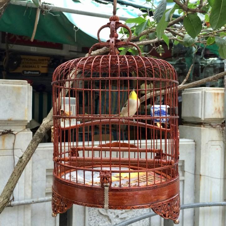 hong kong with kids children kowloon yuen po bird garden