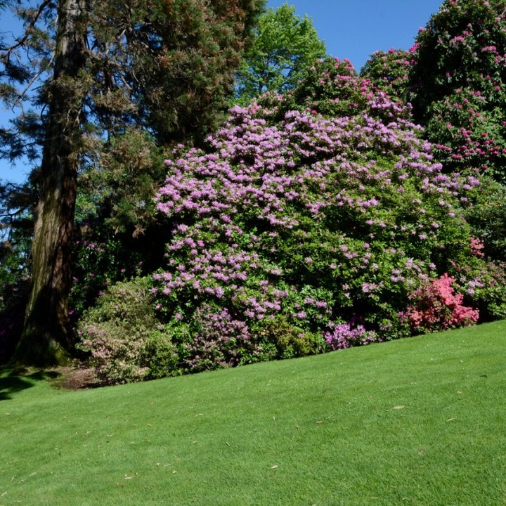 travel with kids children isola madre lago maggiore italy garden azaleas
