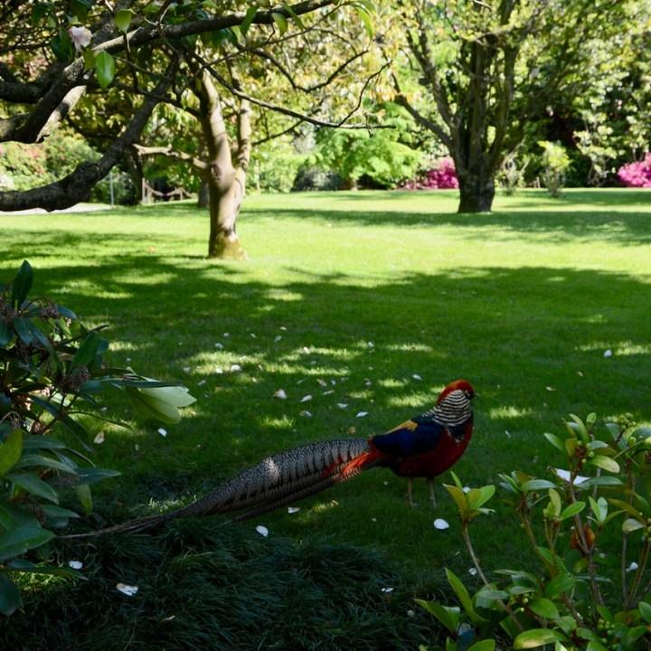travel with kids children isola madre lago maggiore italy garden birds