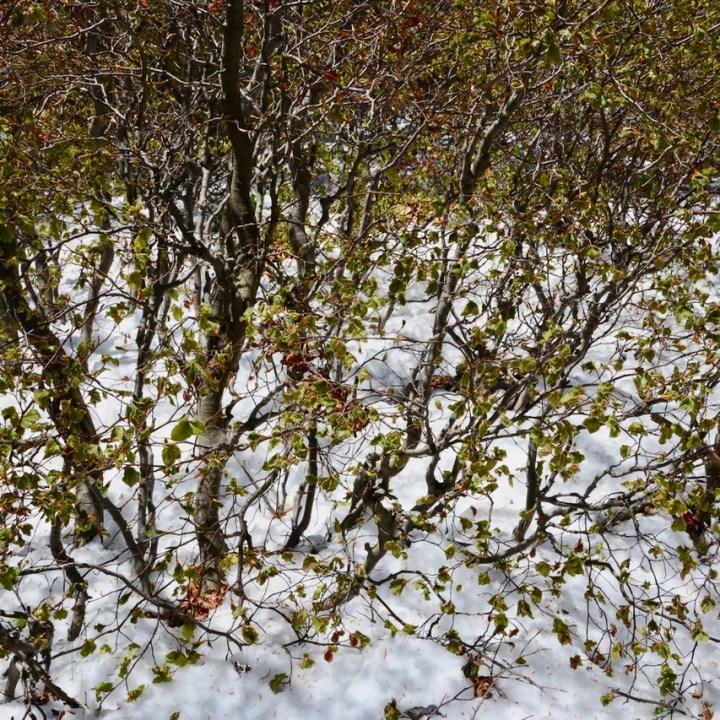 travel with kids children mount spalavera lago maggiore hiking snow beech forest