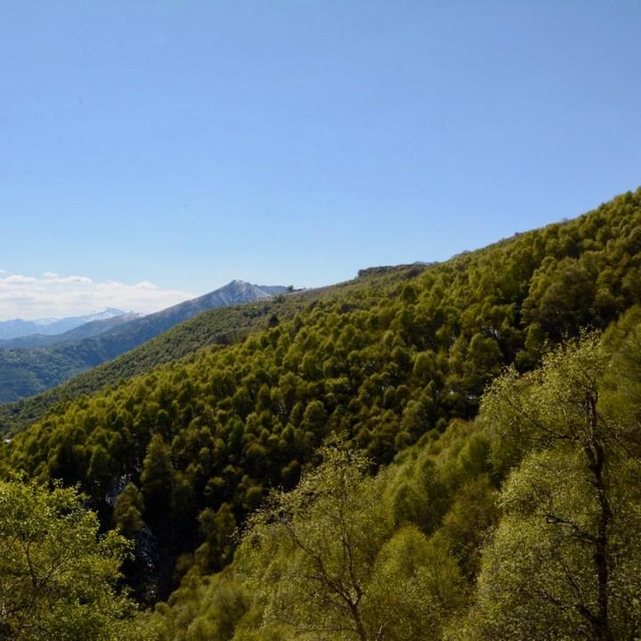travel with kids children mount spalavera lago maggiore hiking forest