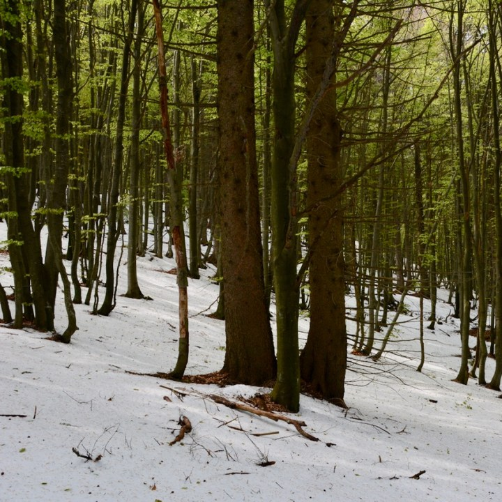 travel with kids children mount pian bello lago maggiore italy hiking snow