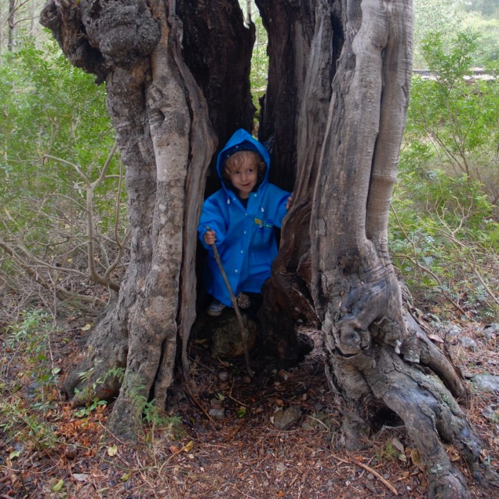 travel with kids children Soller Mallorca olive tree