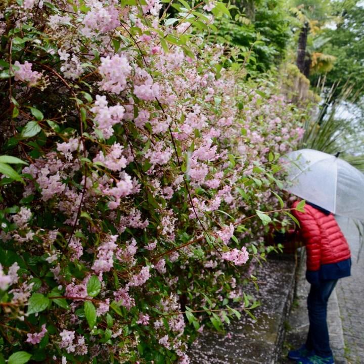 travel with kids children villa taranto botanical garden pallanza lago maggiore scented flowers