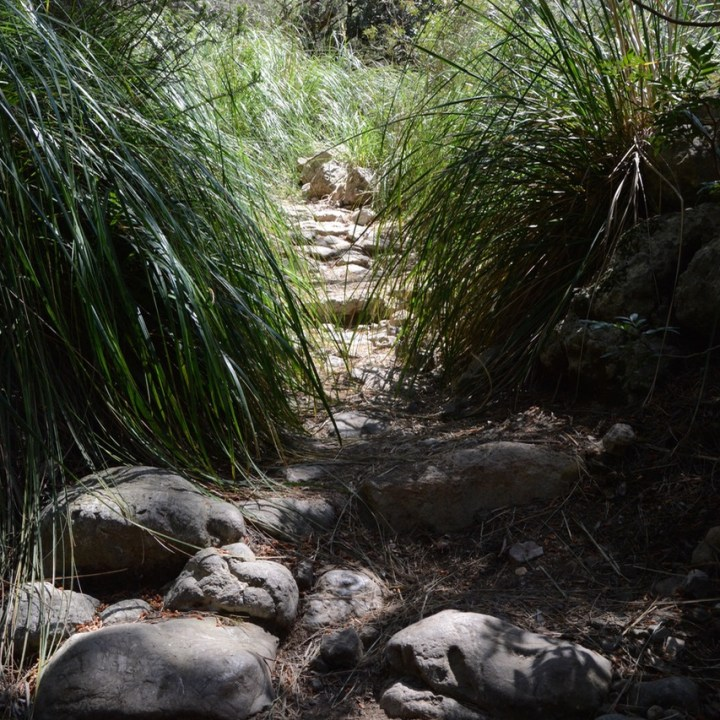 travel with kids children soller mallorca spain hiking cala tuent grassy path