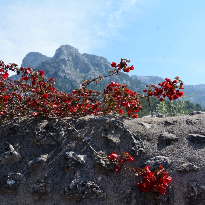 travel with kids children soller mallorca spain hiking fornalutx bougainvillea