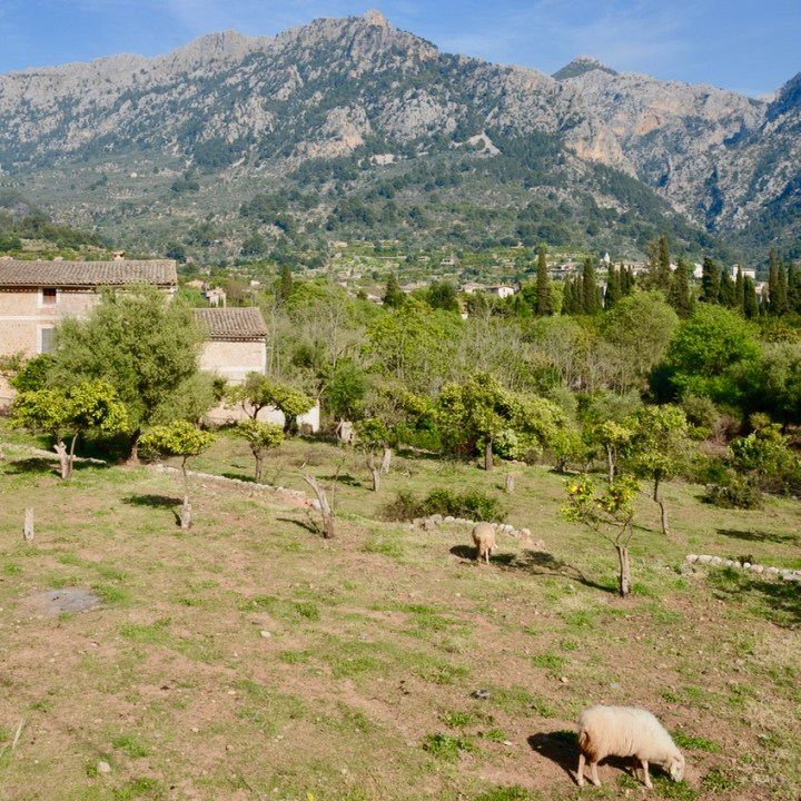 travel with kids children soller mallorca spain hiking fornalutx sheep