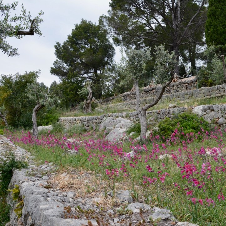 travel with kids children soller mallorca spain mirador ses barques pink flowers