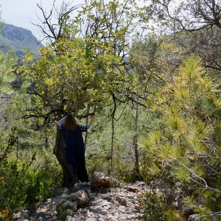 travel with kids children soller mallorca spain hiking cala tuent baltix d'avall path