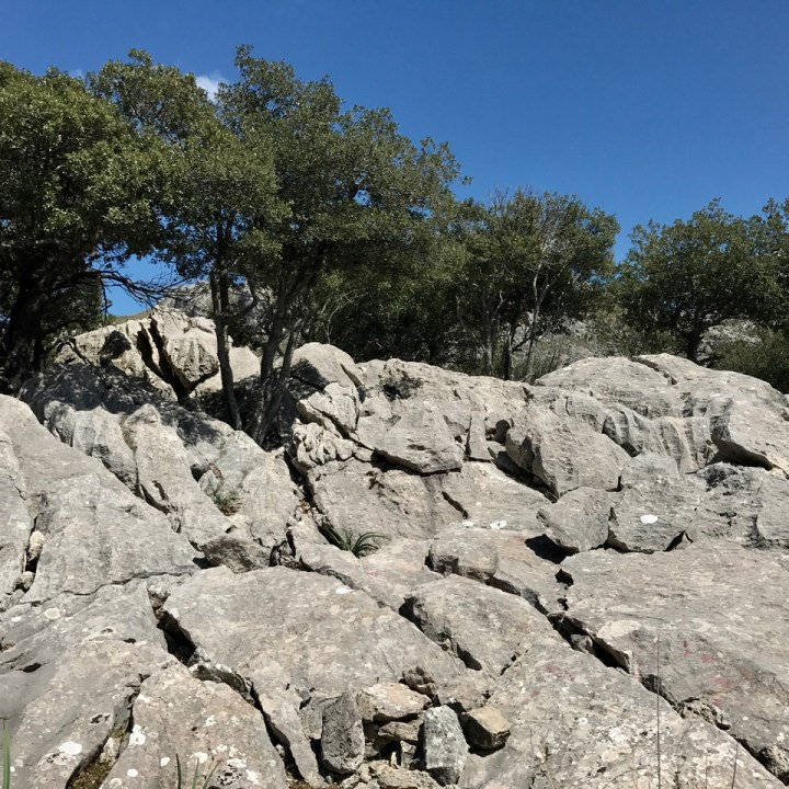 travel with kids children soller mallorca spain three mountain tops hike lofre trees