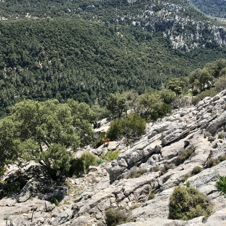 travel with kids children soller mallorca spain three mountain tops hike lofre mountain goat
