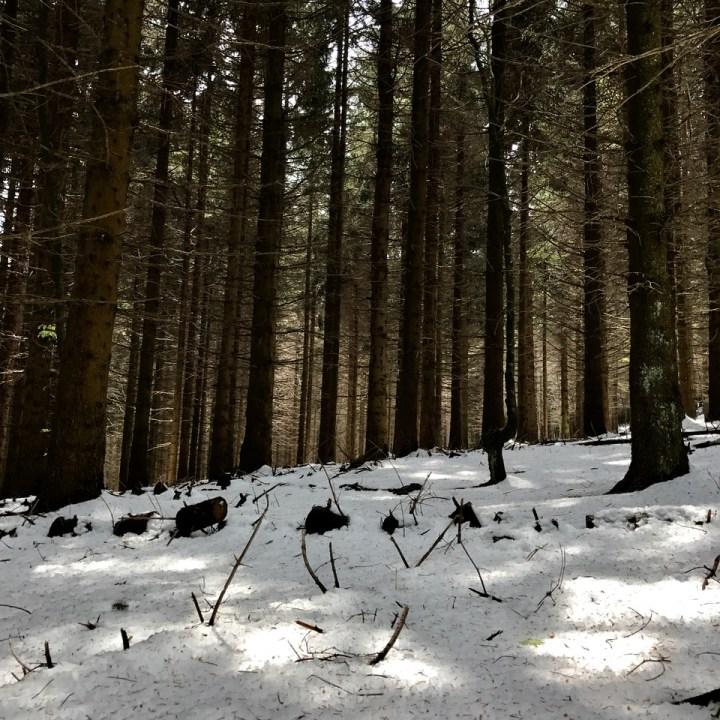 travel with kids children mount pian bello lago maggiore italy hiking pine trees