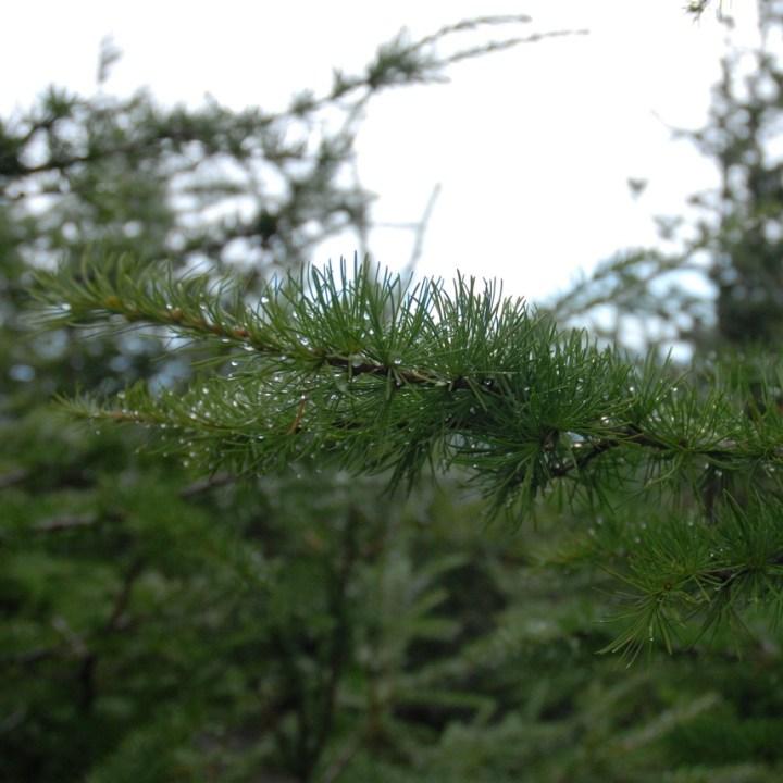 travel with kids hiking mount fuji japan pine tree
