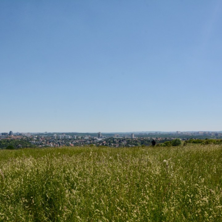 travel with kids prague meadow