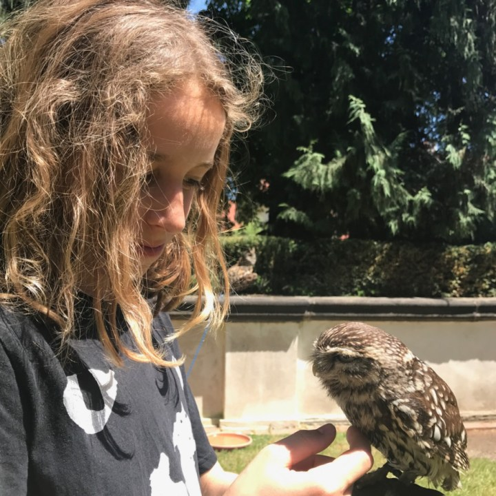 prague with kids guide owl