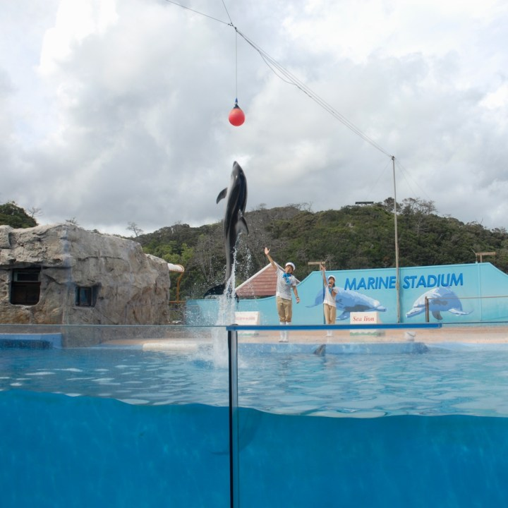 japan with kids shimoda aquarium dolphin show