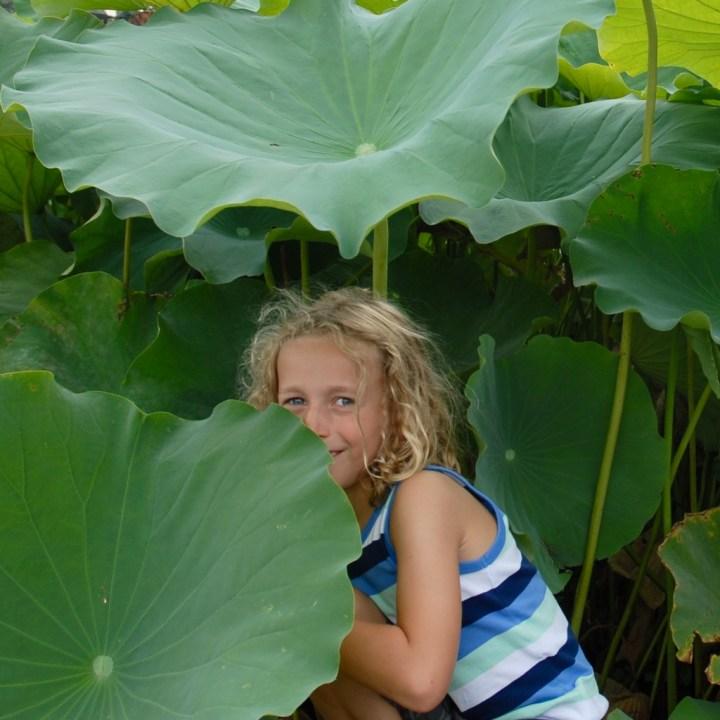 heda japan with kids izu peninsular lotus leaf