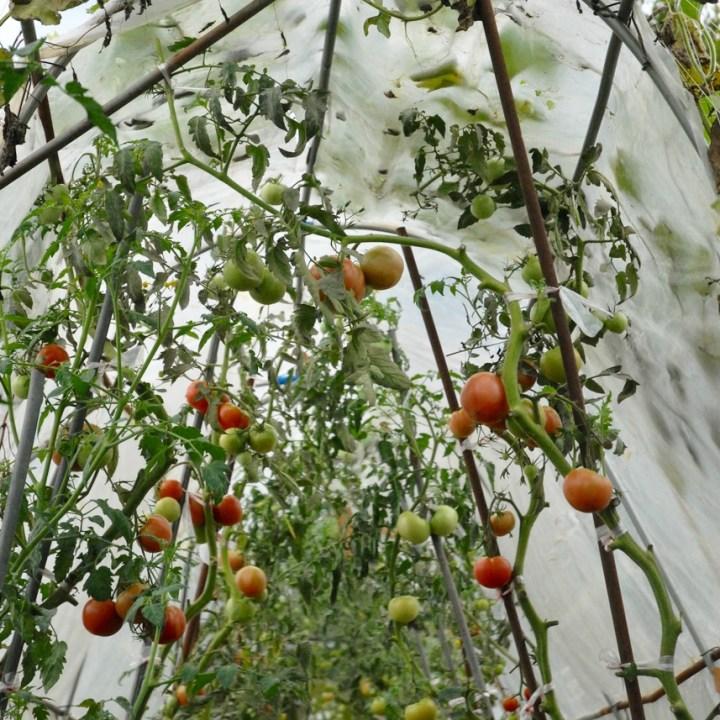 travel with kids japan fujiyoshida hiking tomatoes