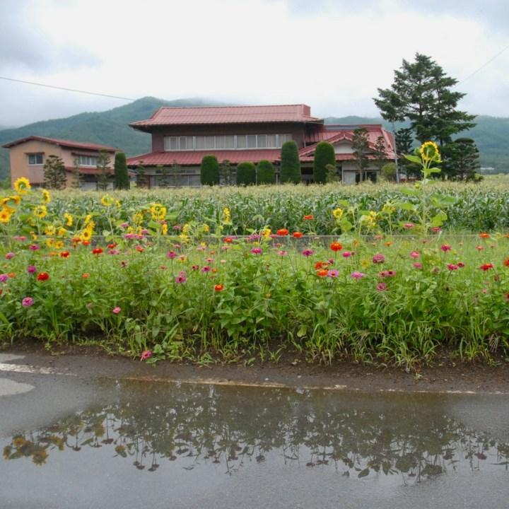 travel with kids japan fujiyoshida hiking wild flowers