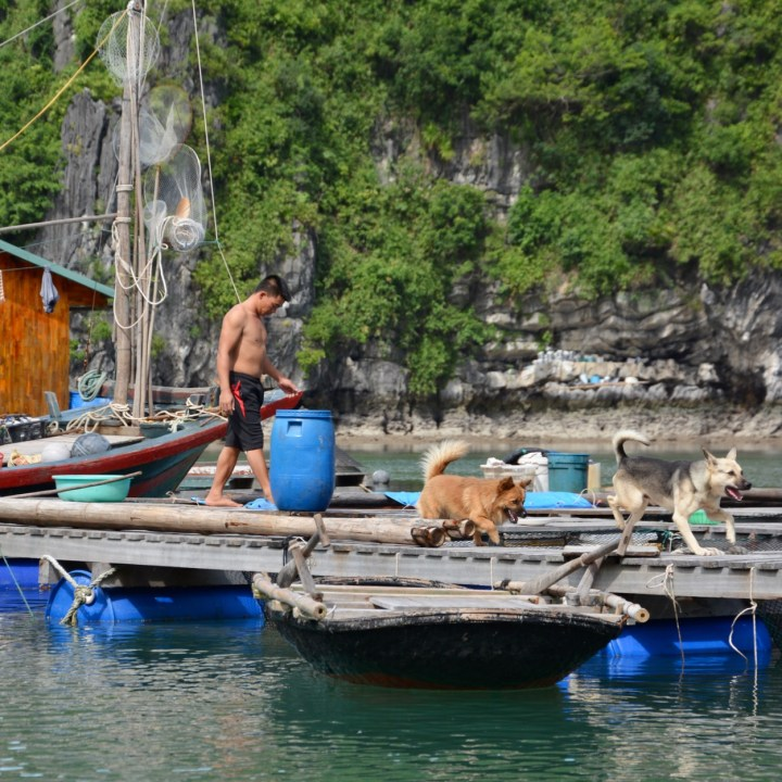 vietnam with kids ha long bay dogs